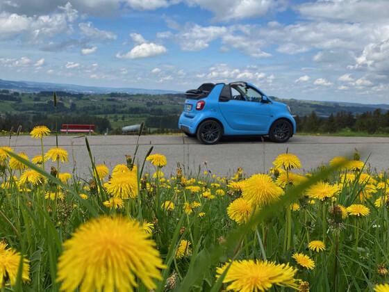 Little Blue - www.242allgaeu.de